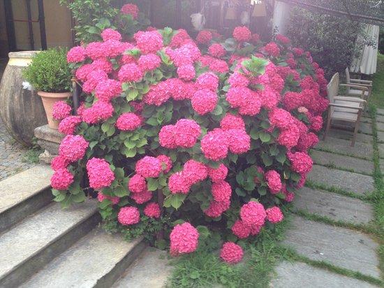 La Locanda della Maison Verte: fiori nel giardino