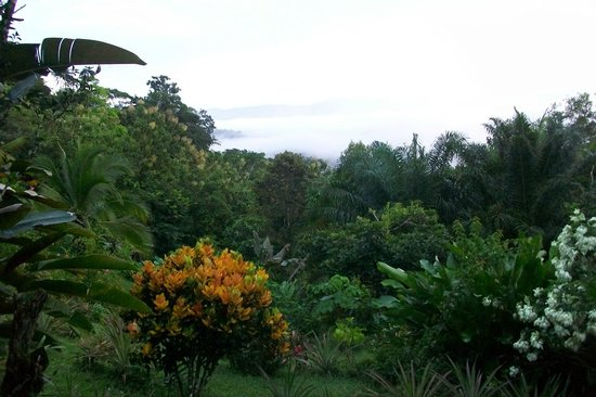 Cabinas El Mirador Lodge : View Overlooking Rainforest