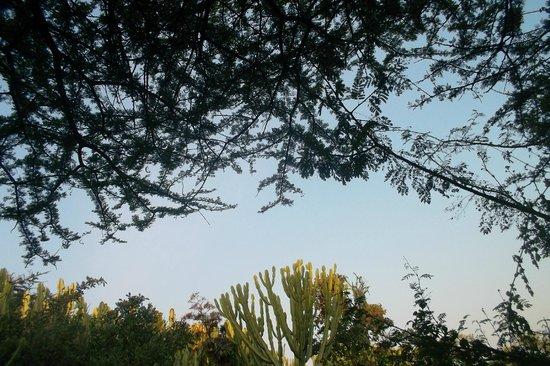 Kirurumu Manyara Lodge: vistas
