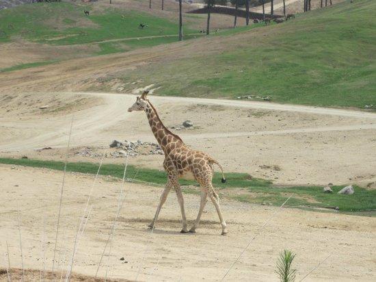 San Diego Zoo Safari Park: xx
