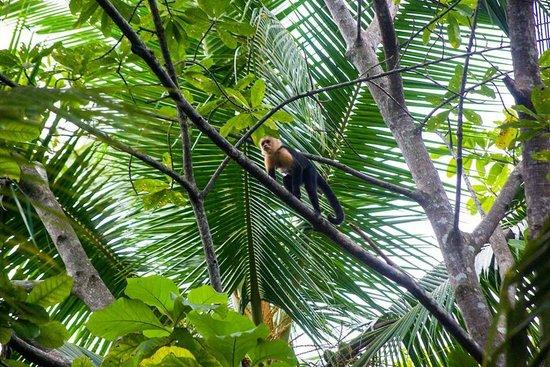 Dos Palmas Beach Cabinas: Monkeys hang out above our porch