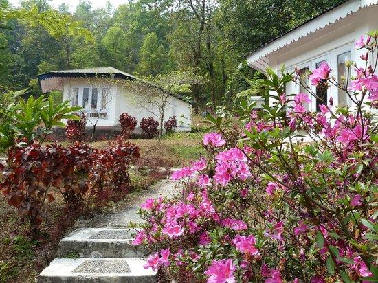 Suntalekhola: tourist cottages of WBFDC