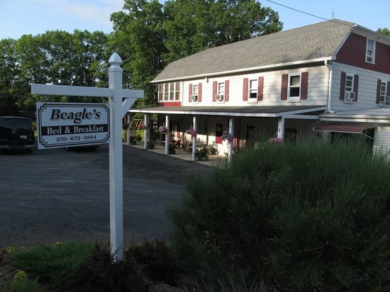 Beagle's Bed & Breakfast: Beagle B&B