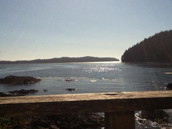 Duffin Cove Oceanfront Lodging: view from waterfront cabin