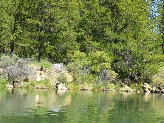 Sunriver Marina : Picturesque scenery - lots of trees, rocks, cattails, grasses