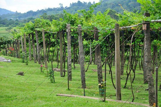 Jolimont Winery: Parreirais