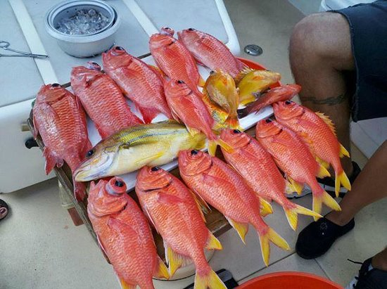 Maui Fun Charters: Catch of the day
