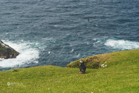Hermaness National Nature Reserve: Puffin!!
