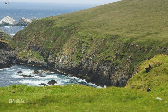 Hermaness National Nature Reserve: Views over the cliff tops