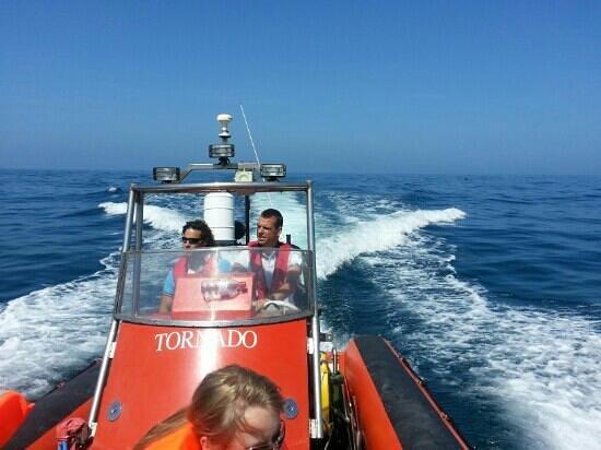 dive newquay sea safari