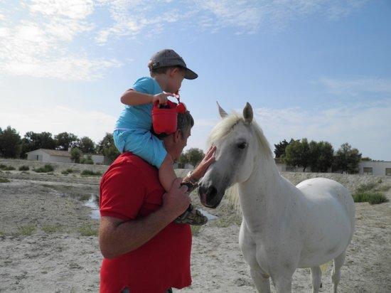 Hotel de Cacharel: Rencontre avec les chevaux à l'étang devant les chambres