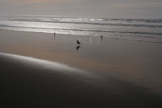 Half Moon Bay State Beach: Shoreline