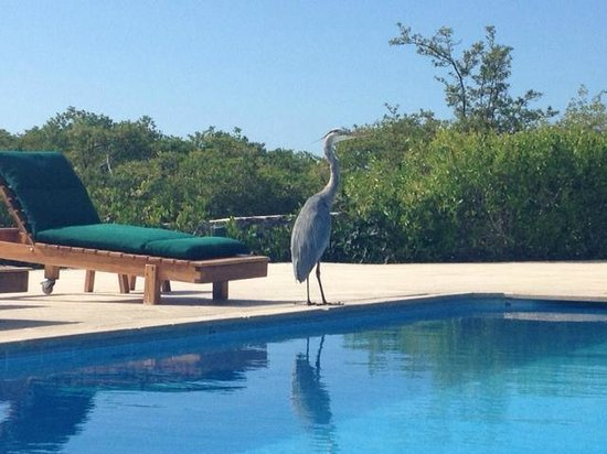 Finch Bay Eco Hotel: Pool with Galapagos visitor
