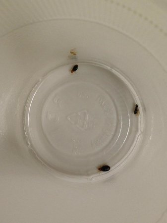 Junction City, KS: Bed Bugs
