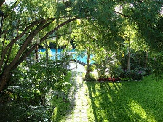 Anticavilla Hotel, Restaurant & SPA : Ficus en el jardin