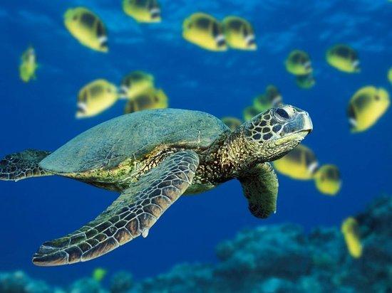 Aqua Marine Dive Center: sea turtle