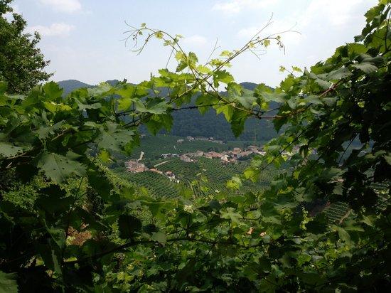 Veneto Tours - Day Tours: 1
