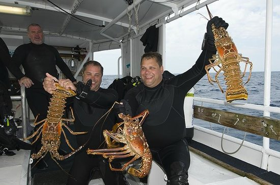 Olympus Dive Center: Good Lobster day