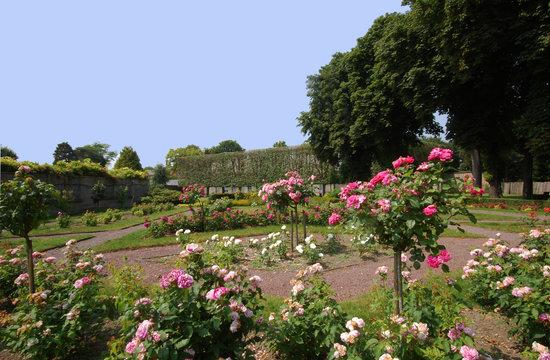 Douai, France: Roseraie du Jardin des Plantes