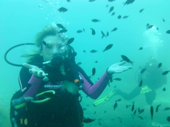 H2O Divers: :))