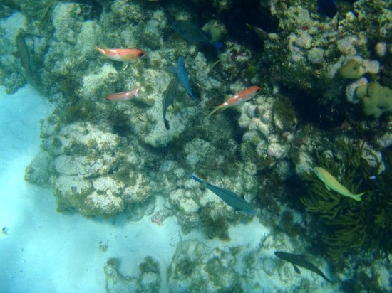 Petit St. Vincent Resort : Snorkeling