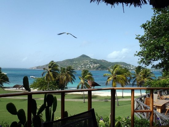 Petit St. Vincent Resort : View from the main restaurant