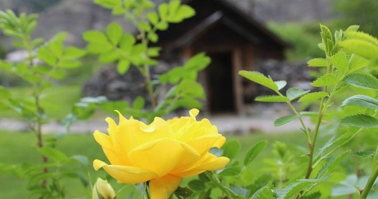 Grist Mill and Gardens at Keremeos: Chinese Rose and Apple House