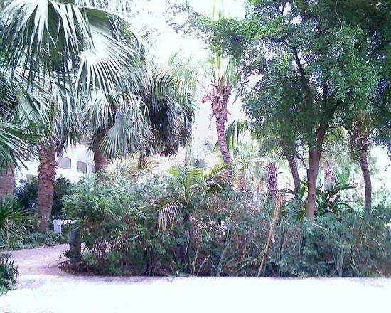 Floris Suite Hotel - Spa & Beach Club: Foliage around the pool