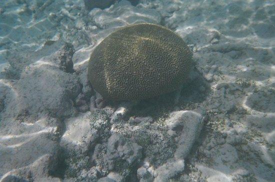 Floris Suite Hotel - Spa & Beach Club: Brain Coral is everywhere