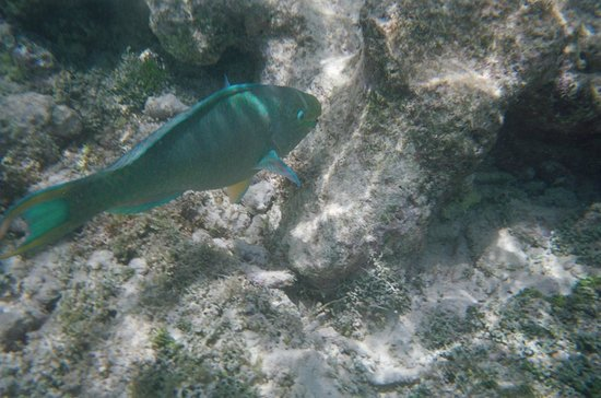 Floris Suite Hotel - Spa & Beach Club: Tropical Fish