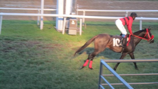 Garrison Savannah - Barbados Turf Club: Heading to the start