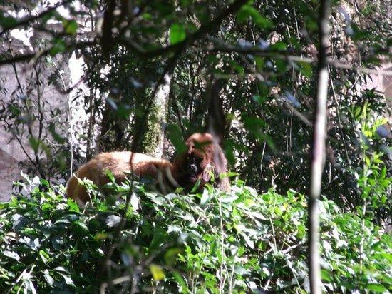 Caracol State Park: Visitantes