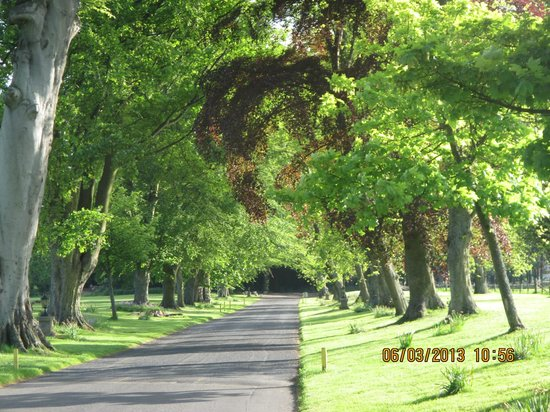 Kilconquhar Castle Estate and Country Club: Entrance drive