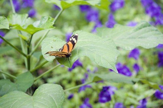 Tilajari Hotel Resort: Butterfly garden
