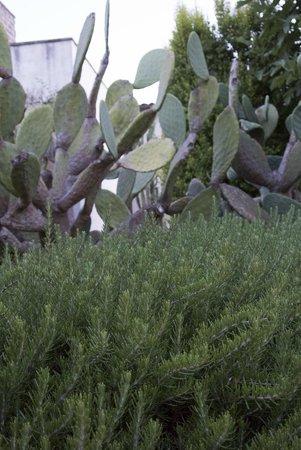 Masseria Don Cirillo: fichi d'india e erbe aromatiche