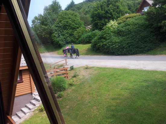 Barend Holiday Village: View from window of horse riders