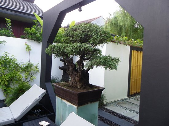 Bonsai Villas: Nice Bonsai near entrance