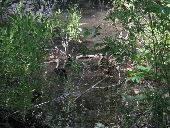 Morrison-Knudsen Nature Center: Ducks in the pond