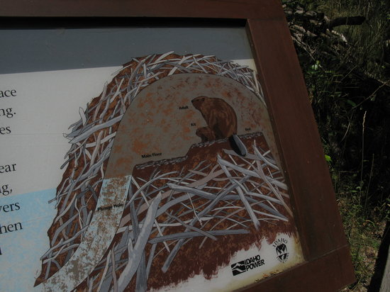 Morrison-Knudsen Nature Center: Sign about the beaver den. A baby beaver is called a kit!