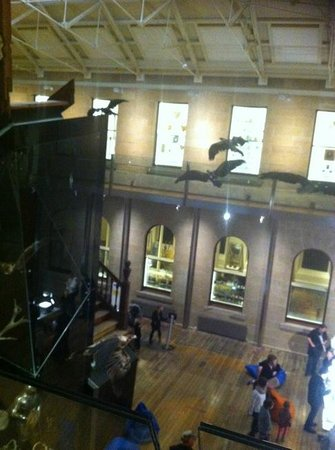 Tasmanian Museum and Art Gallery: Interior