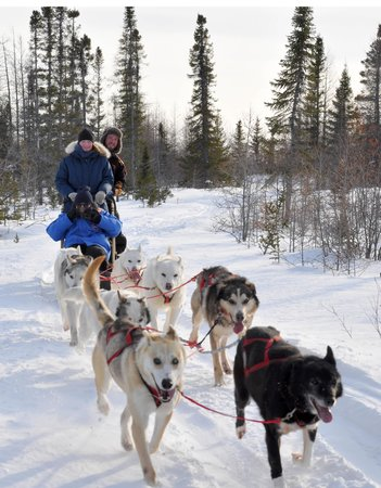 Tundra Inn : Dogsled coming!