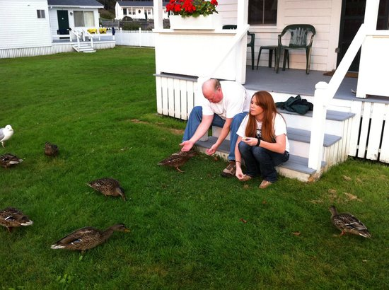Ocean Point Inn and Resort: Ducks on the Lawn