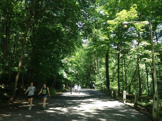 Wissahickon Valley Park: Forbidden Drive