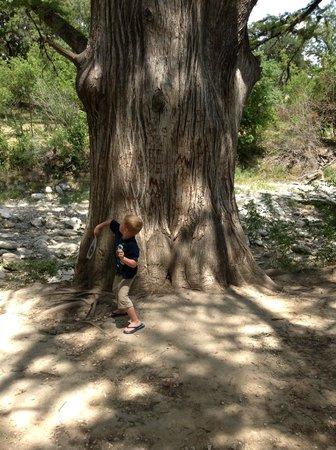 Luckenbach Texas General Store: Big Tree by Creek