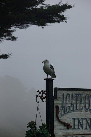 Agate Cove Inn Hotel: Seagull on a foggy morning