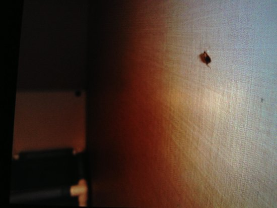 Holiday Inn San Diego - La Mesa: Watch out for cockroaches and don't bring any home