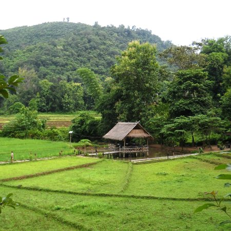Kamu Lodge : A view of the bar