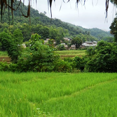 Kamu Lodge: A view of the Kamu tribe village