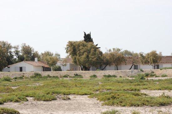 Hotel de Cacharel: Vue de l'étang