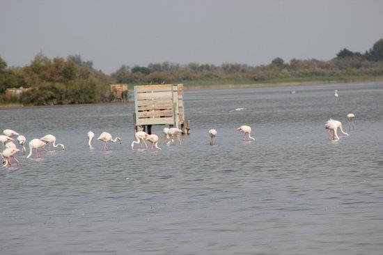 Hotel de Cacharel : L'étang avec les flamants roses